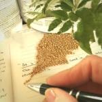 Mustard Seed Blog
